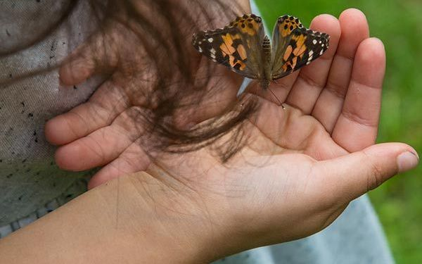 young child holding butterfly